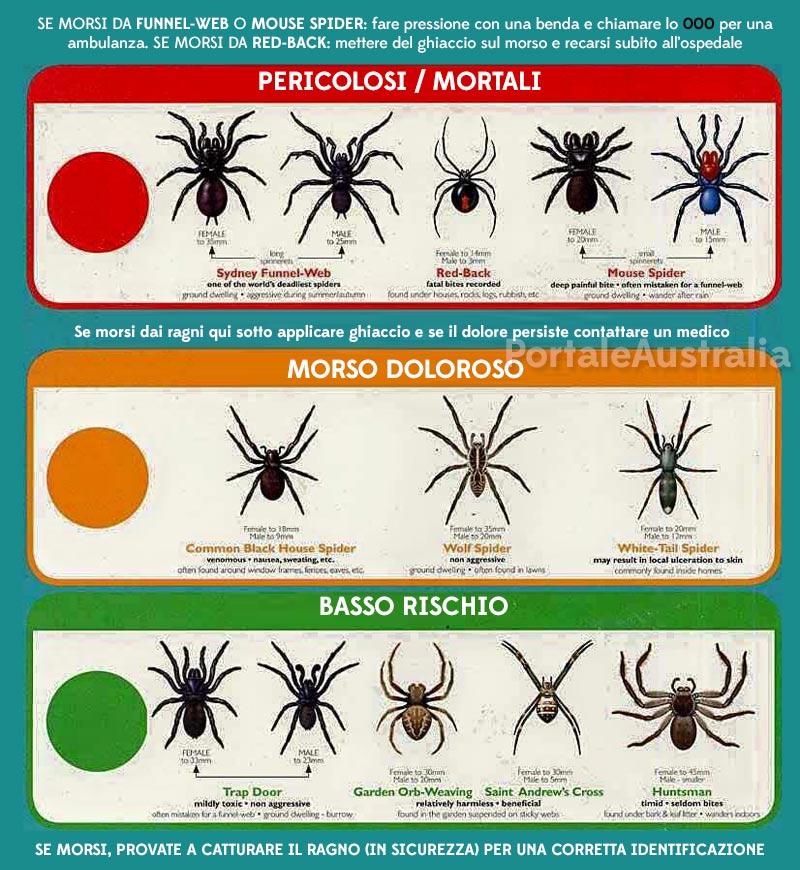 tabella-illustrativa-ragni-mortali-australia