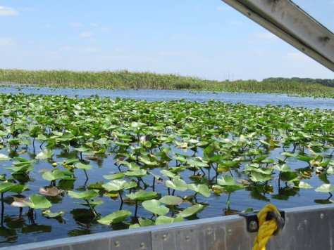 Florida-Everglades-Miami