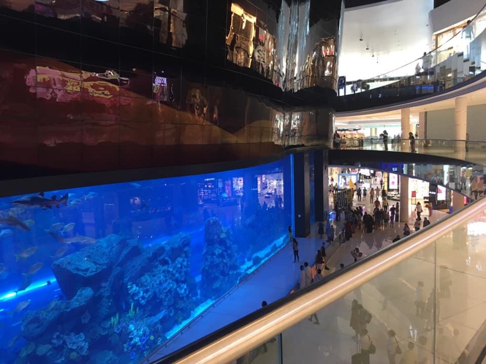dubai-mall-acquario