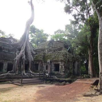 ta-prohm-angkor-wat-cambogia