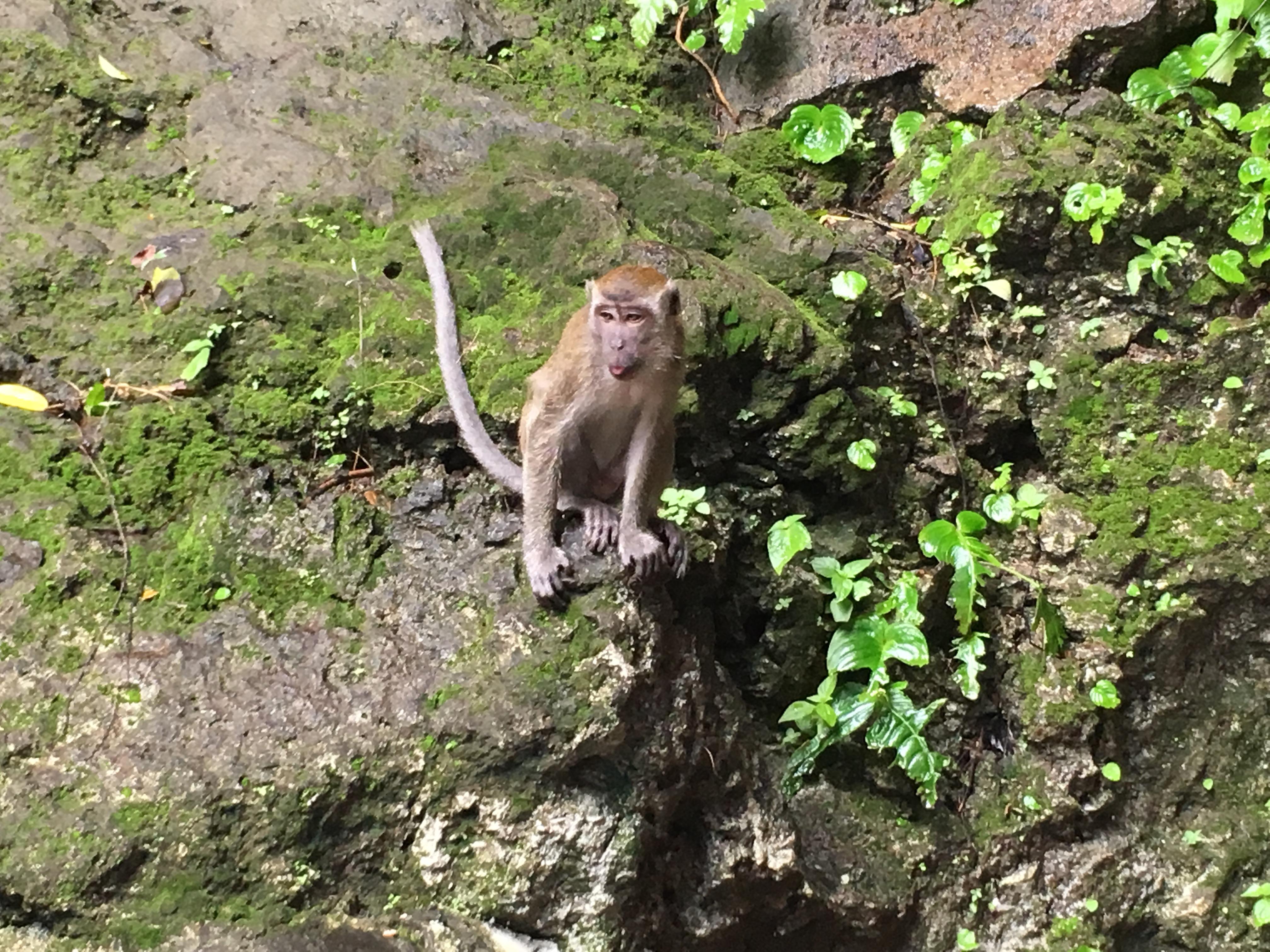scimmia-batu-caves