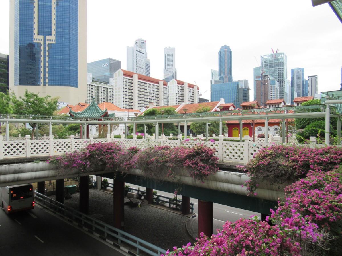 panoramica-chinatown-singapore